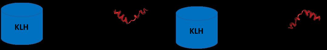 cm52411-klh-peptide-conjugation-scheme.png